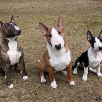 Ester, Bosse och Birgit