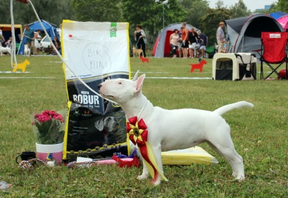 BIR Swedish Bullterrier Open Show 2014