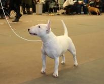Tinybulls Fugees BIR Sodertalje 200301_web